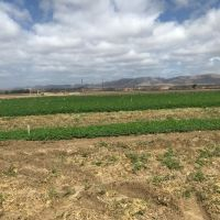 Our Veggie and Strawberry Farmers in Central CA