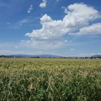 Schwebach Farm - Moriarty, New Mexico