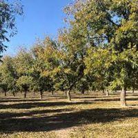 Surratt Farms - Fabens, Texas